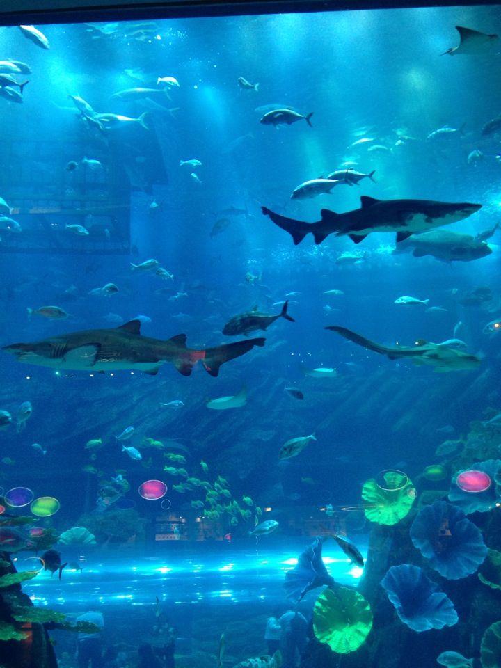 ドバイ水族館   Dubai aquarium, Underwater, Dubai mall