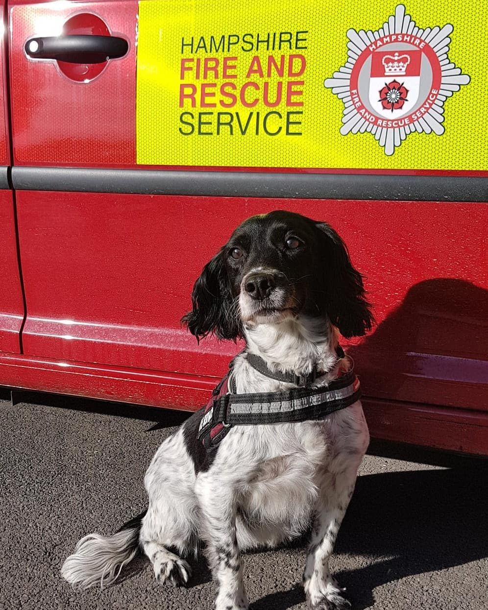 This Evening Search Dog Millie Has Been Assisting Hampshirefireservice Investigators And Hampshireconstabulary Csis At A Fire Dogs With Jobs Dog Search Dogs