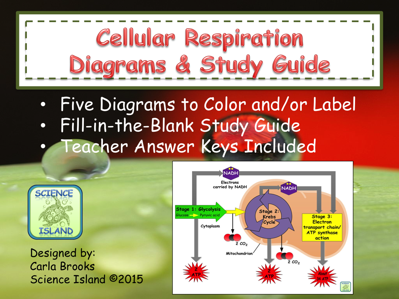 Cellular Respiration Diagrams and Study Guide Diagram