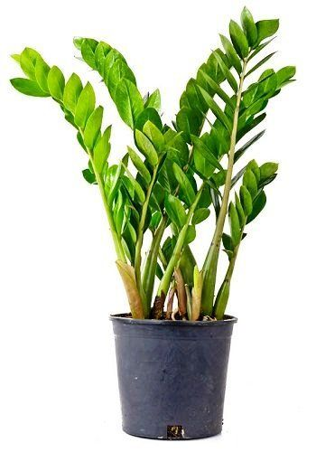 There Are Plants That Grow Without Sunlight, They Need Indirect Exposure,  Some Even Thrive