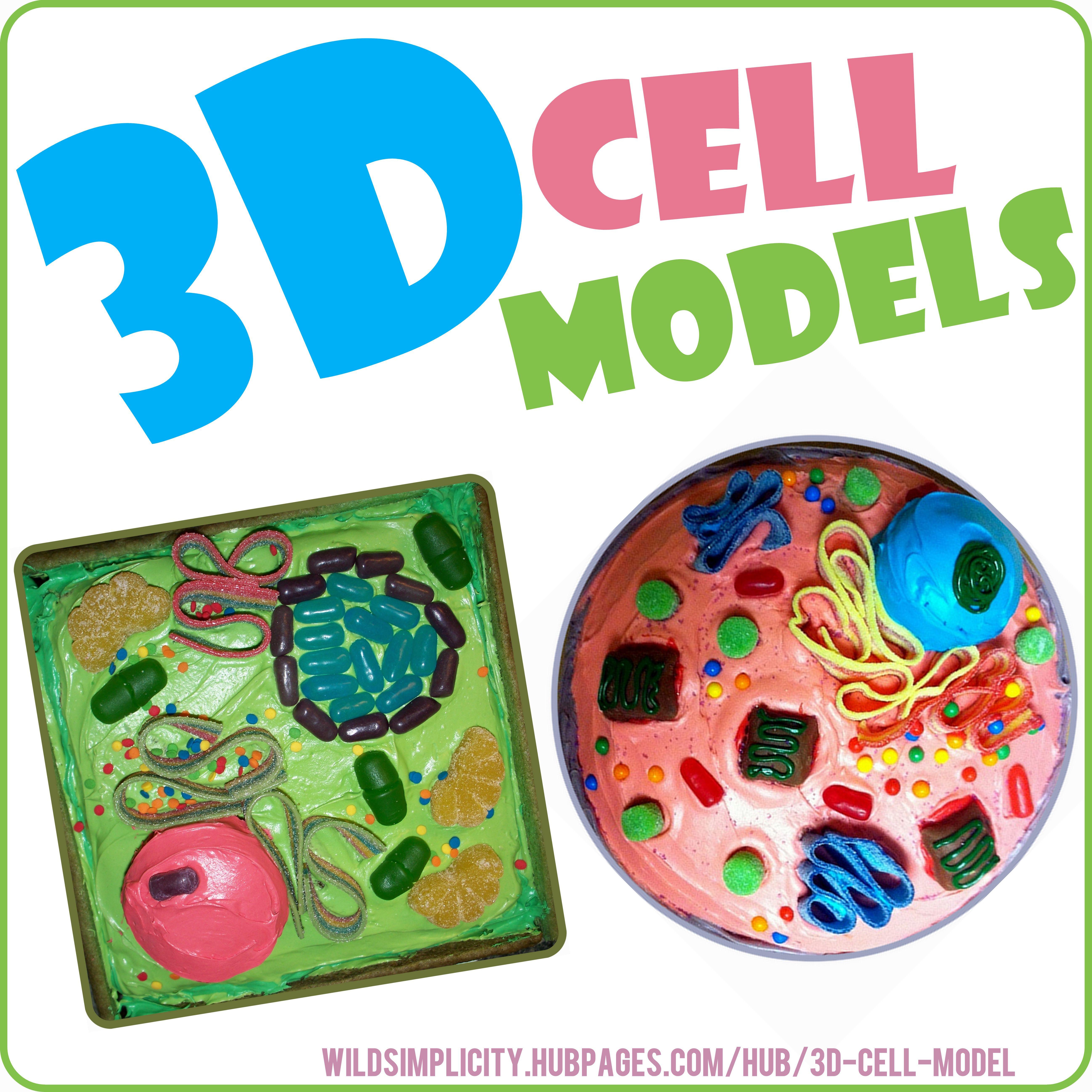 medium resolution of 3d plant animal cell models