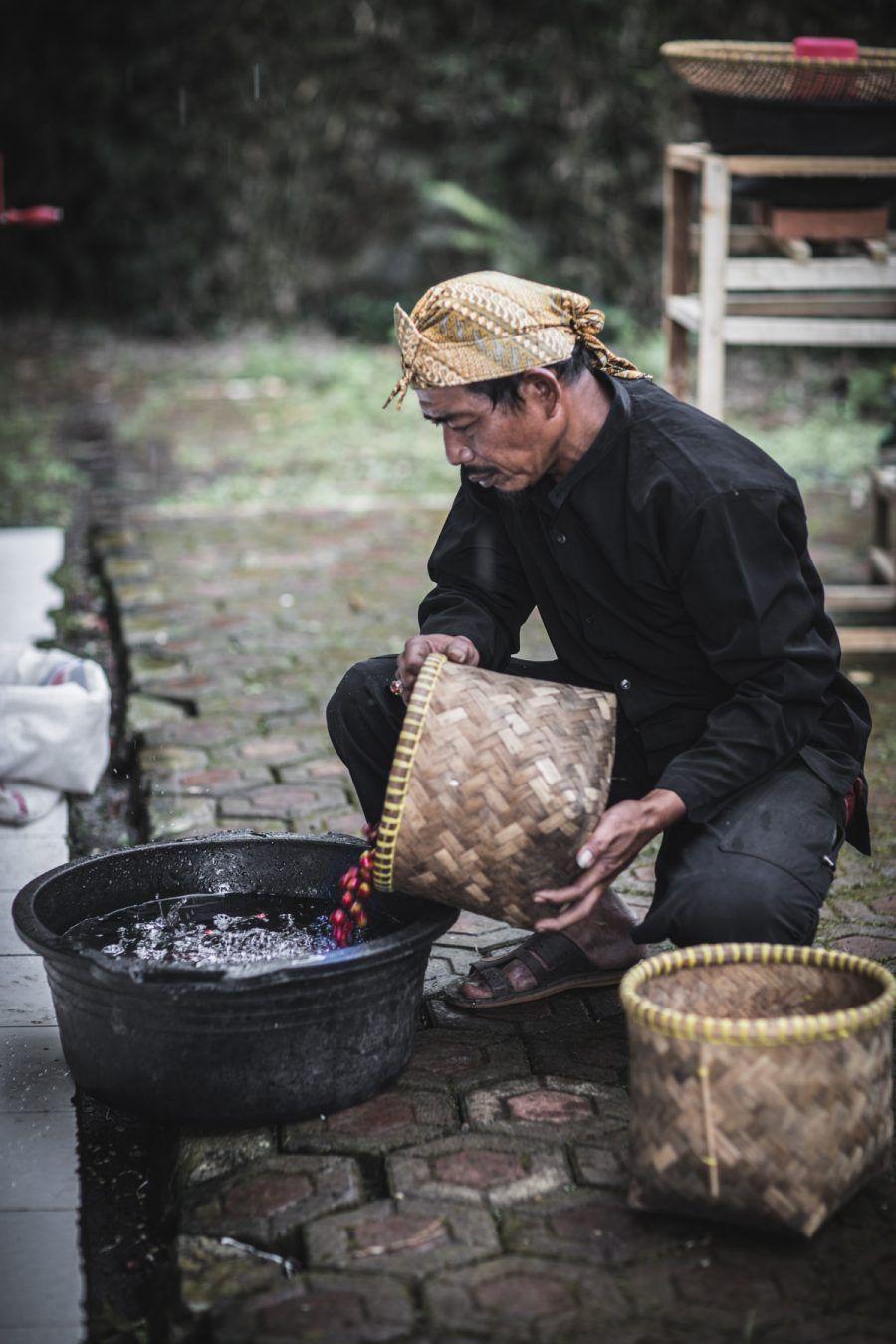 How Coffee is Grown Coffee, Coffee plant, Indonesia