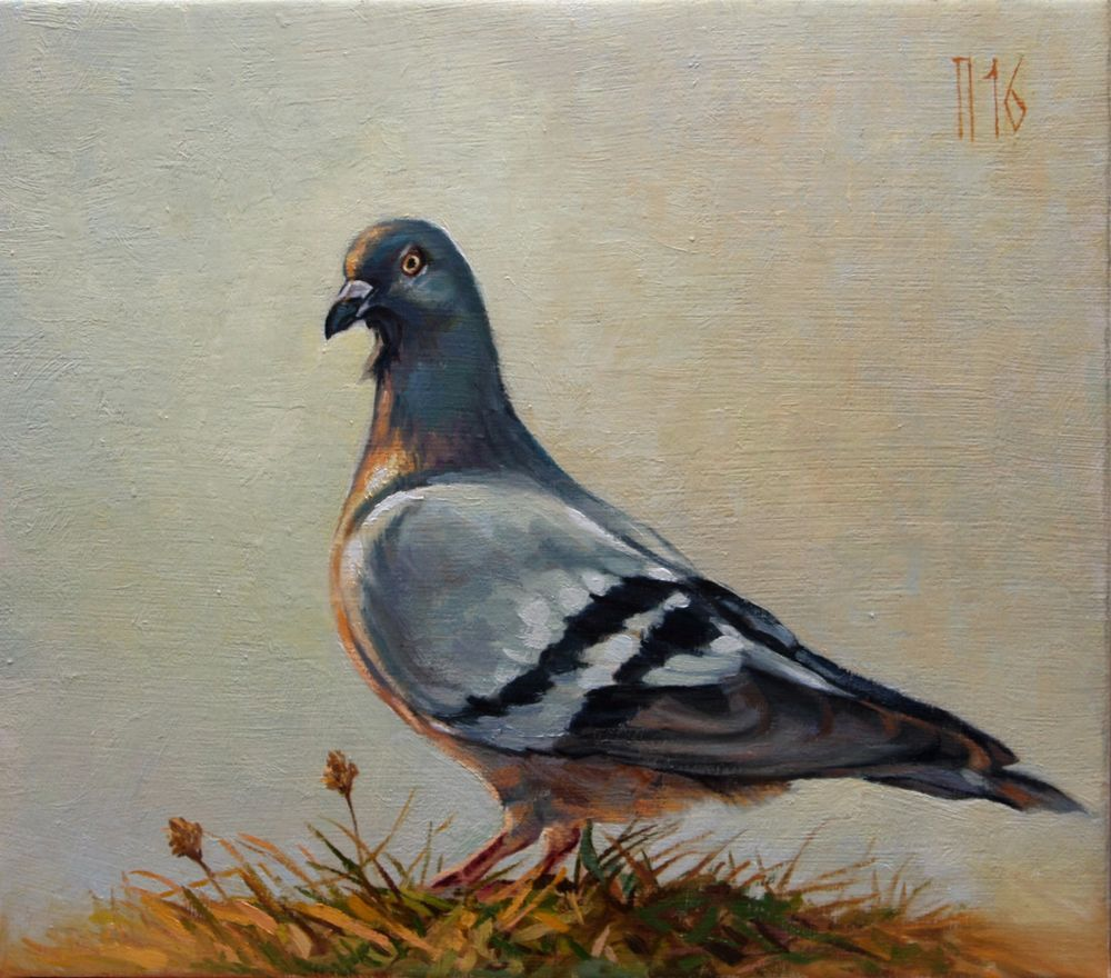 ANIMAL PIGEON DOVE BIRDS Picture Painting Canvas art Prints