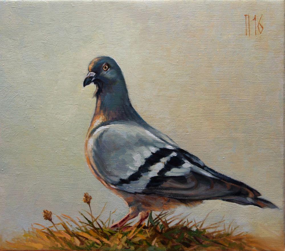 "Original Oil Painting ""pigeon"" Animal Art Nature Landscape"