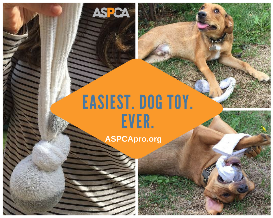 Tip Of The Week Get The Ball Rolling Dog Enrichment Diy Dog