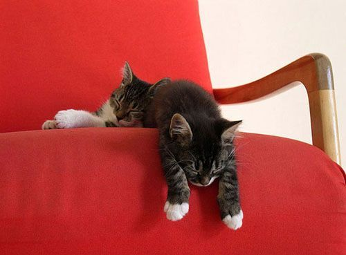Cute Sleeping Baby Cats Cute Cats Http Babycutelittlecatsbernard Blogspot Com Schlafende Katze Katzenbabys Schlafriges Katzenbaby