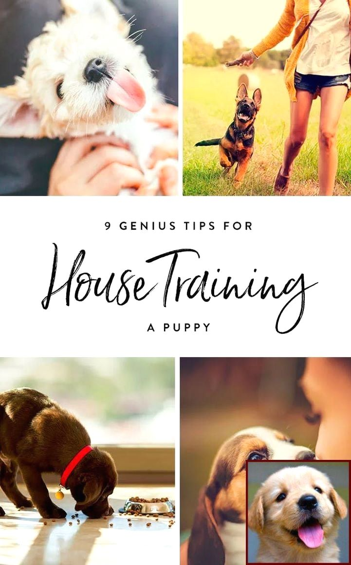 House training a puppy in a high rise and dog behavior