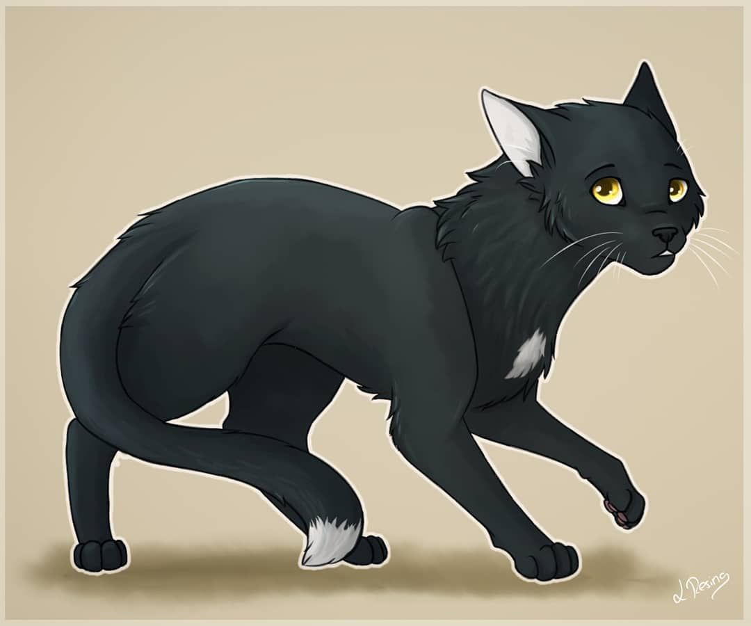 Ravenpaw From Warrior Cats Ravenpaw Warriorcats Cat