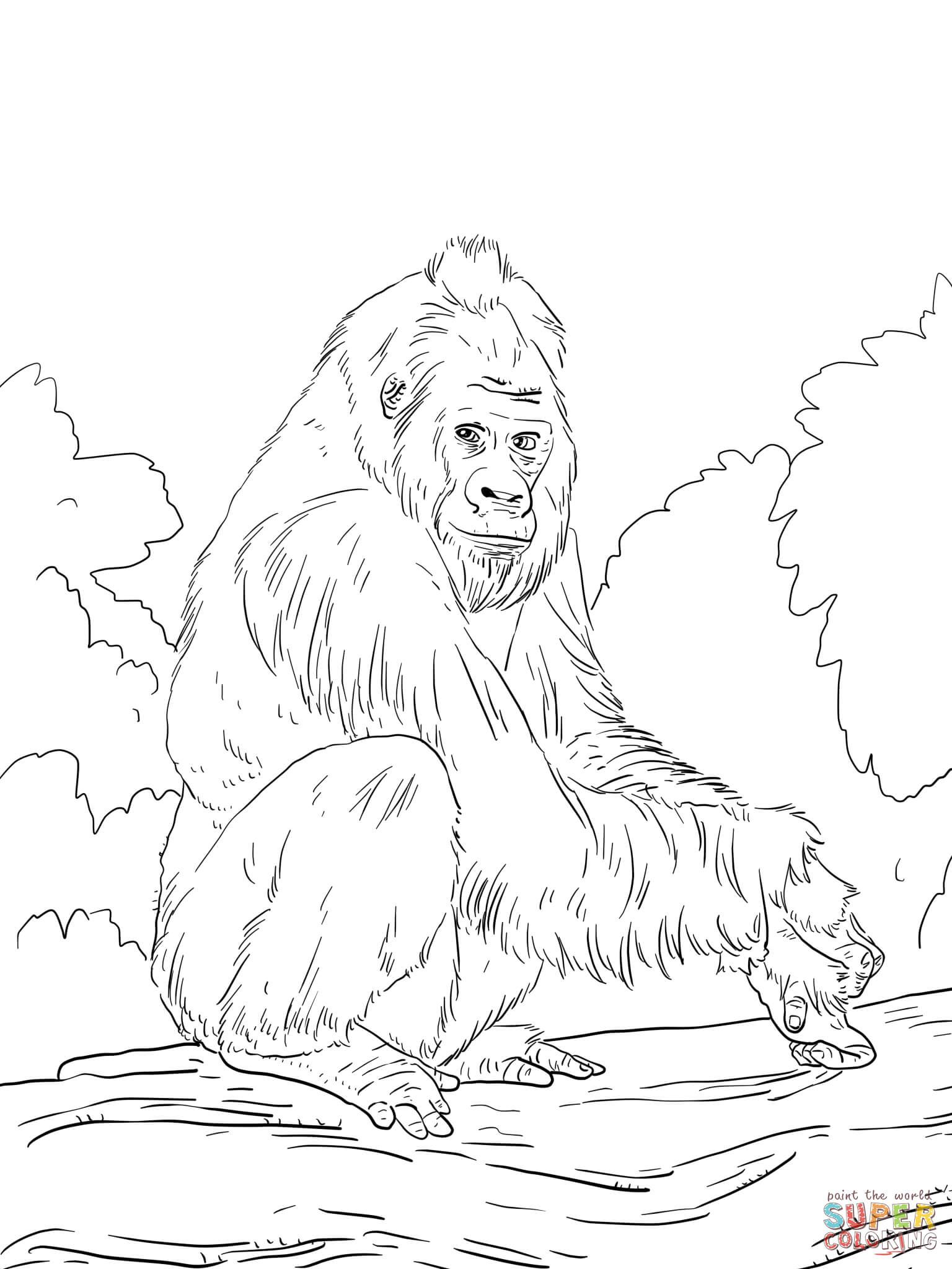 Western Lowland Gorilla Coloring Page From Gorillas Category