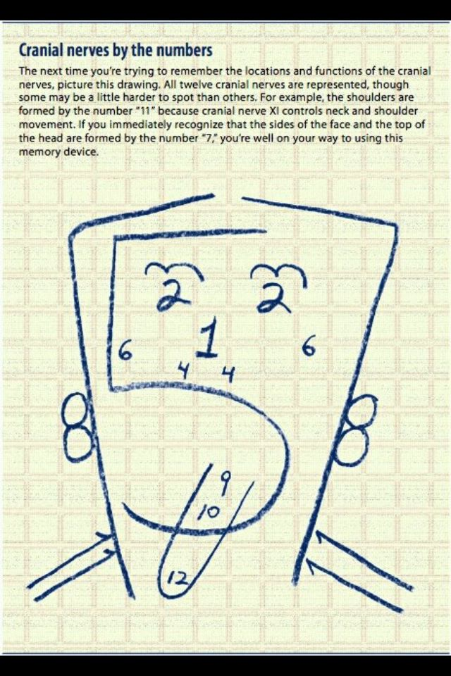 Cranial nerves, this is the easiest way to learn these ...