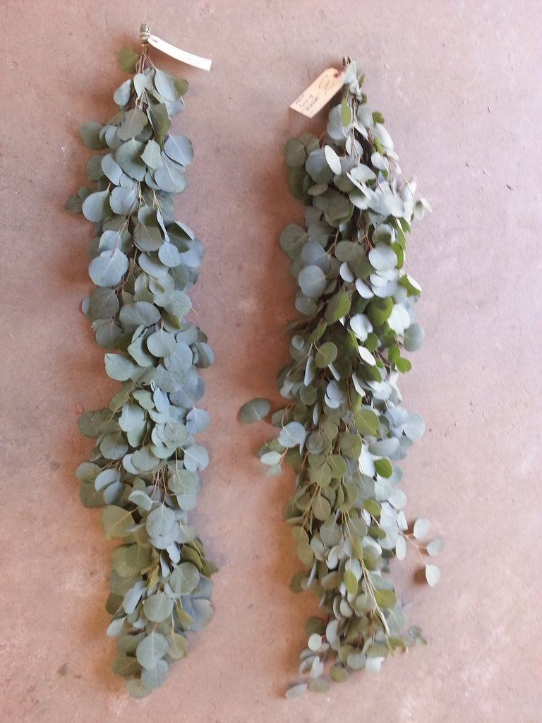 Wedding decorations unique october 2018 Silver Dollar Eucalyptus Garland weddingdecoration  Wedding