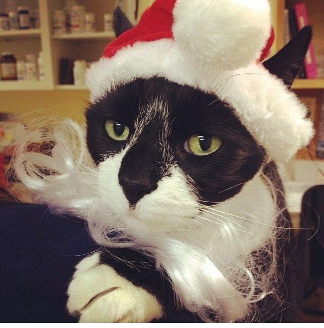 Chrismas  grumpy cat Lol