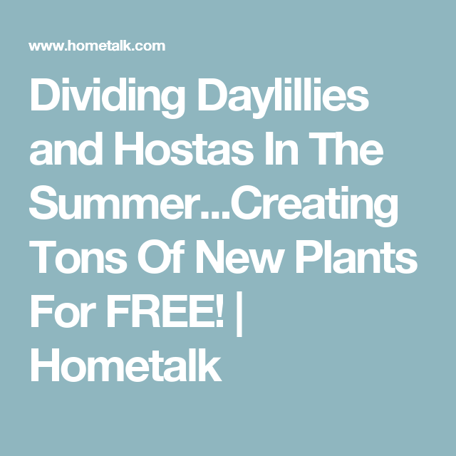 Dividing Daylillies and Hostas In The Summer...Creating Tons Of New Plants For FREE! | Hometalk