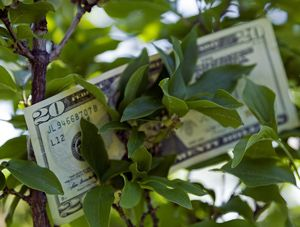 feng shui money tree - Snap Decision/Getty Images