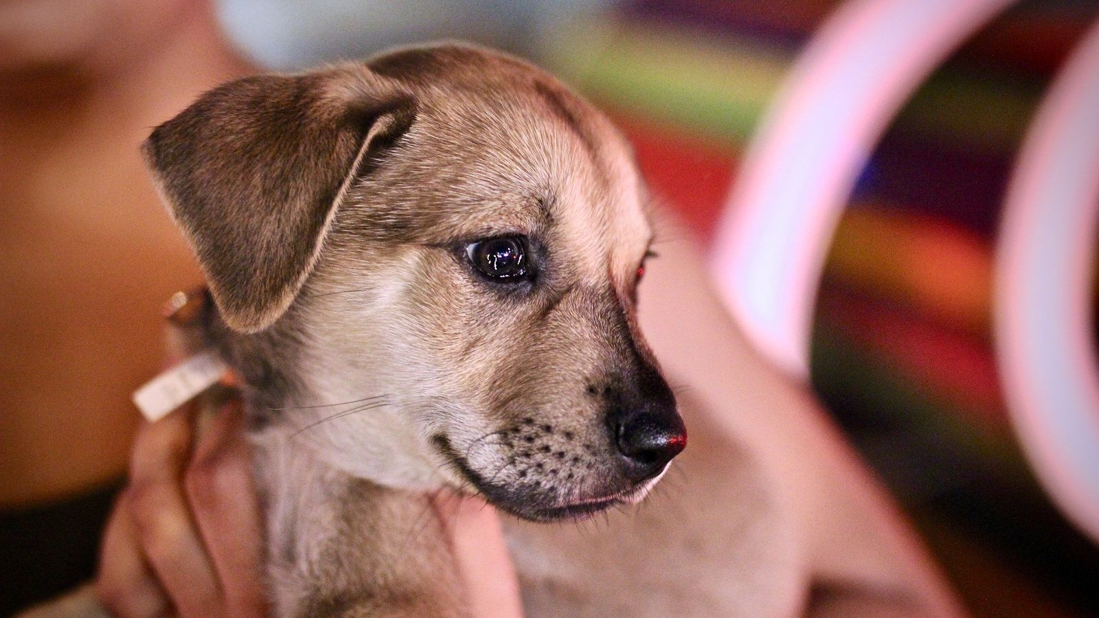 The best animal charities to support right now Puppies