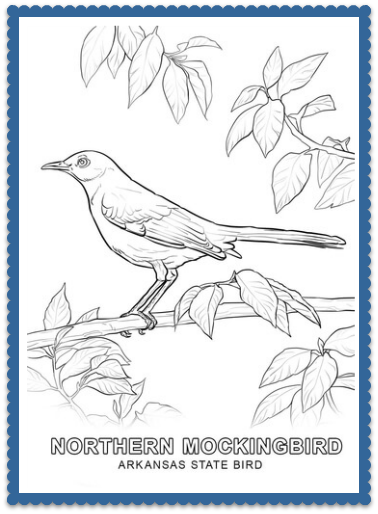 arkansas state bird coloring page print or color online northern mockingbird