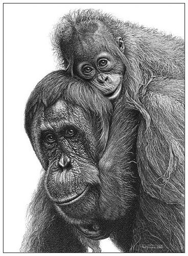 Monkey Drawing Realistic Pet Portraits