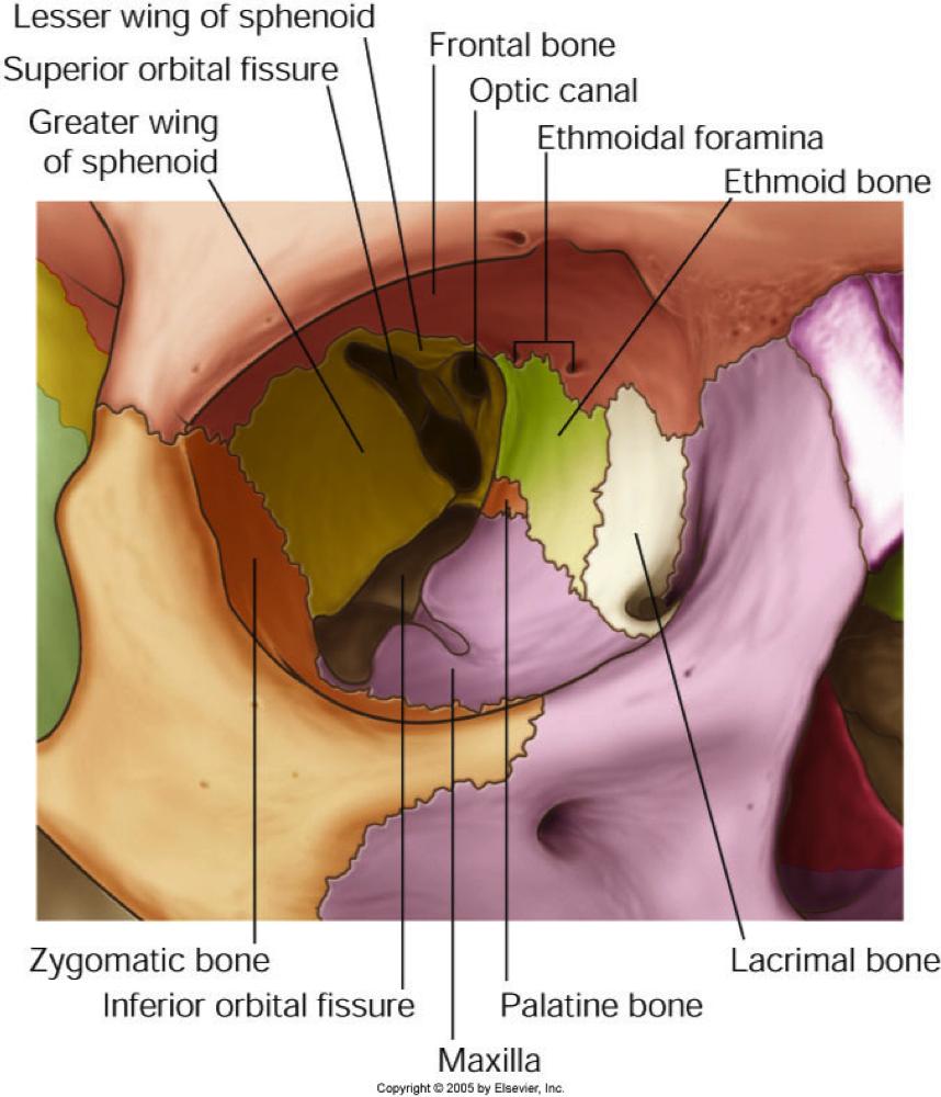 Lacrimal Fossa Of Frontal Bone Lacrimal fossa | forensic anatomy ...