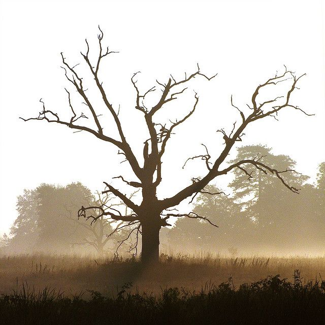 My Friend The Dead Tree Tree Images Nature Images Amazing Photography
