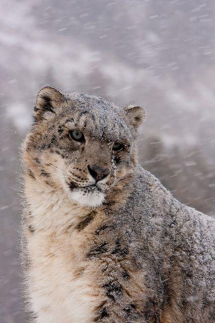 10bullets:  snow crusted fur by missysnowkitten on Flickr.                                                                                                                                                                                 Mehr