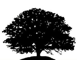 Poplar Tree Clip Art Google Search Tree Silhouette Tree Wedding Invitations Little Christmas Trees