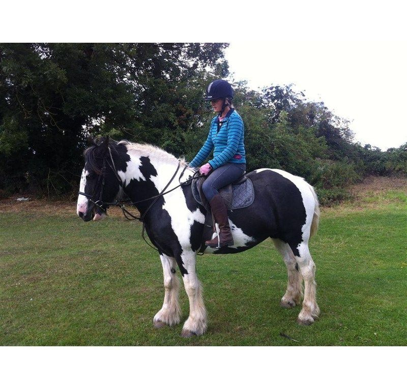 Dream first horse Gypsy Vanner for sale | HorseDeals.co.uk