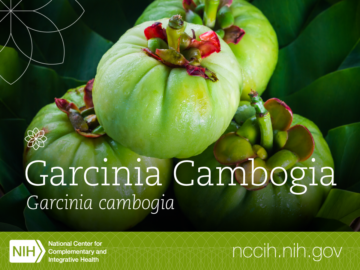 The Garcinia Cambogia Tree Which Grows In India Produces A Fruit Called Tamarind It Is Usually Used To Flavor Curries And Garcinia Garcinia Cambogia Health
