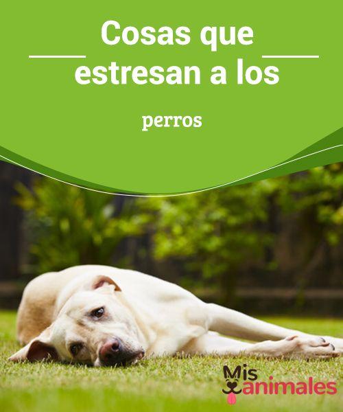 Cosas Que Estresan A Los Perros Mis Animales Perros Perros Durmiendo Entrenamiento Perros
