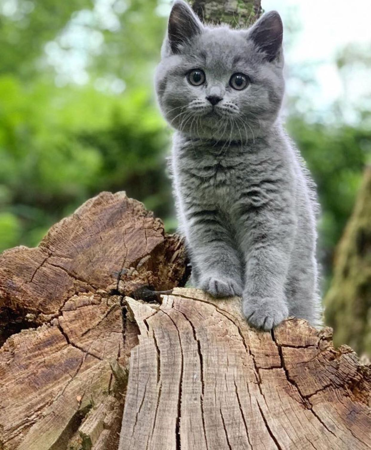 Pin By Inez Joyce Grove On The Fiery Cross Season 5 Outlander Cats Cute Cats And Kittens