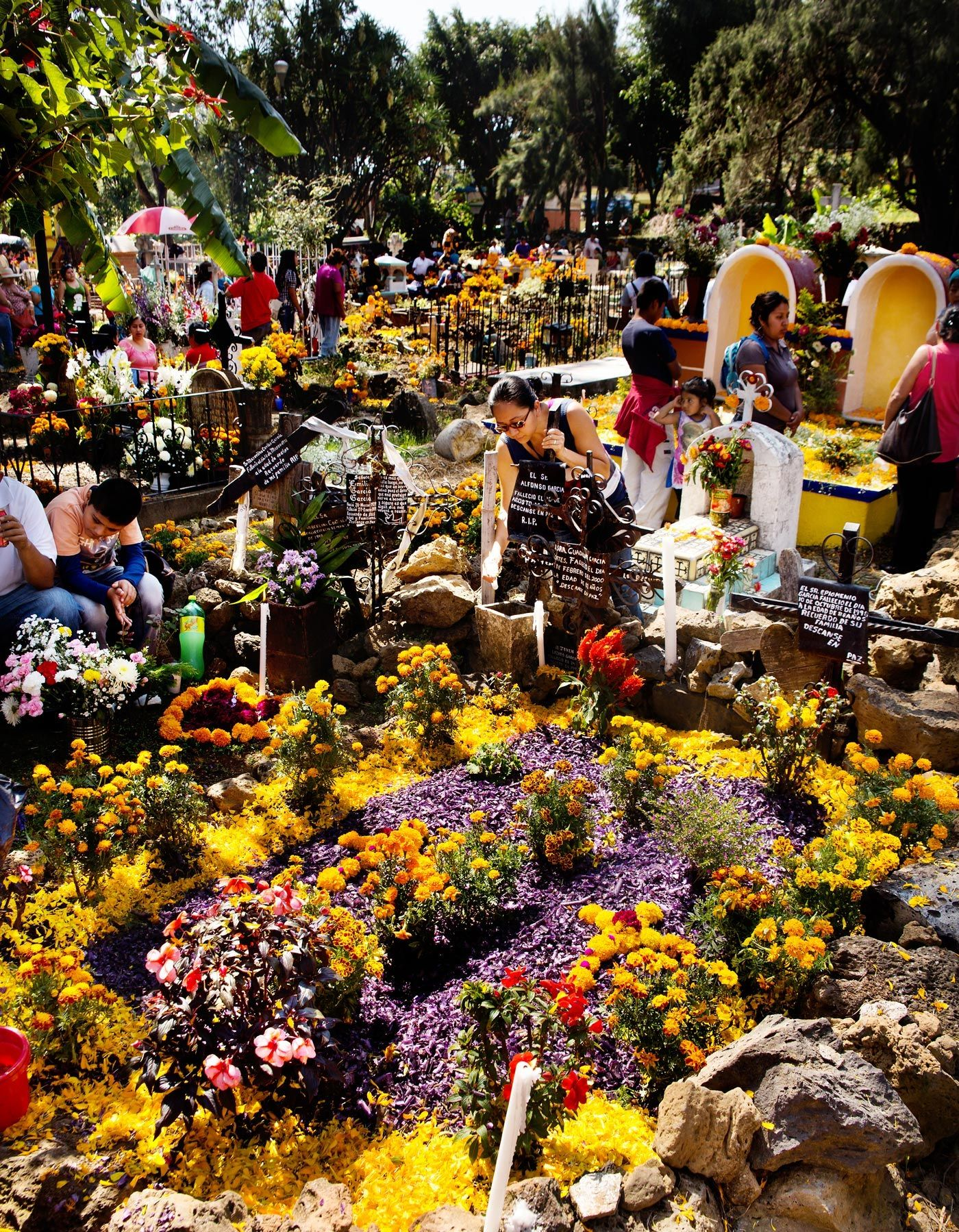Marigolds & the Mexican Day of the Dead | Art, Music, Movies, Books ...