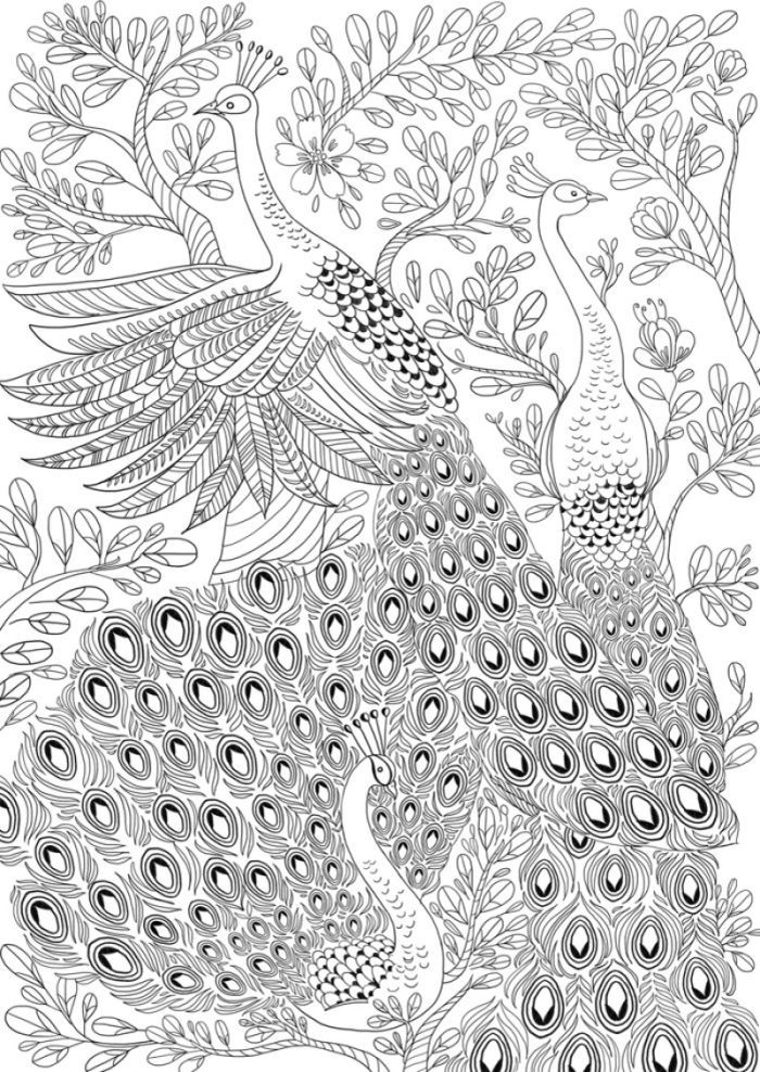 Peacocks adult colouring