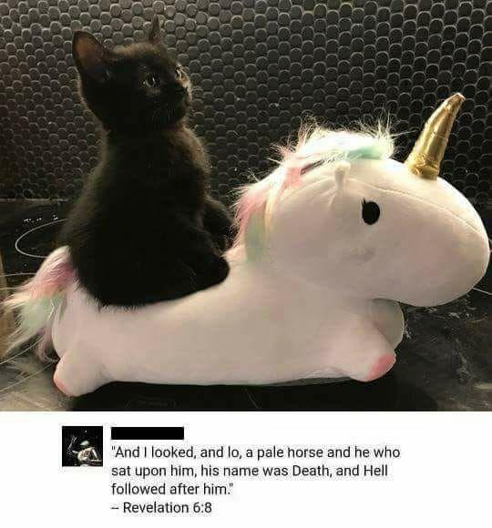 Black Cat Unicorn Animal Funnies Pinterest Funny Pictures