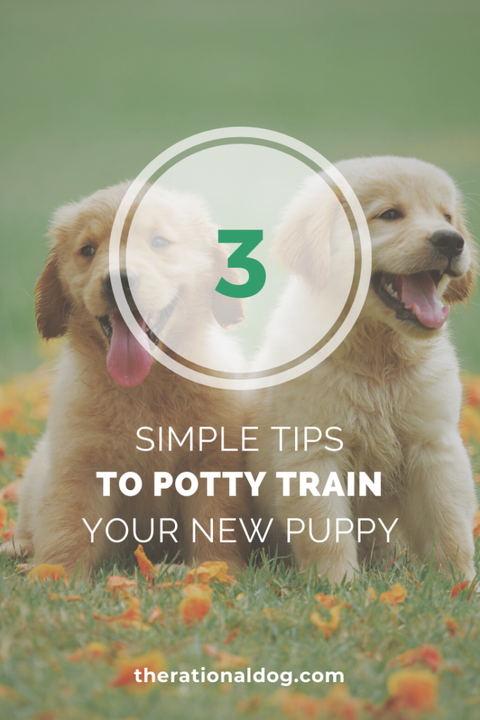 3 Tips To Potty Train Your Puppy In 2020 Puppy Potty Training