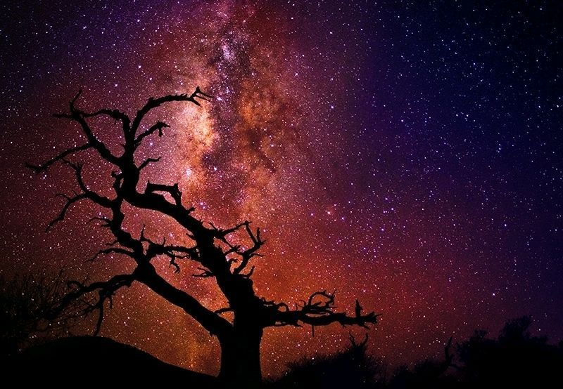 Details About Peter Lik Tree Of The Universe Photos I Like