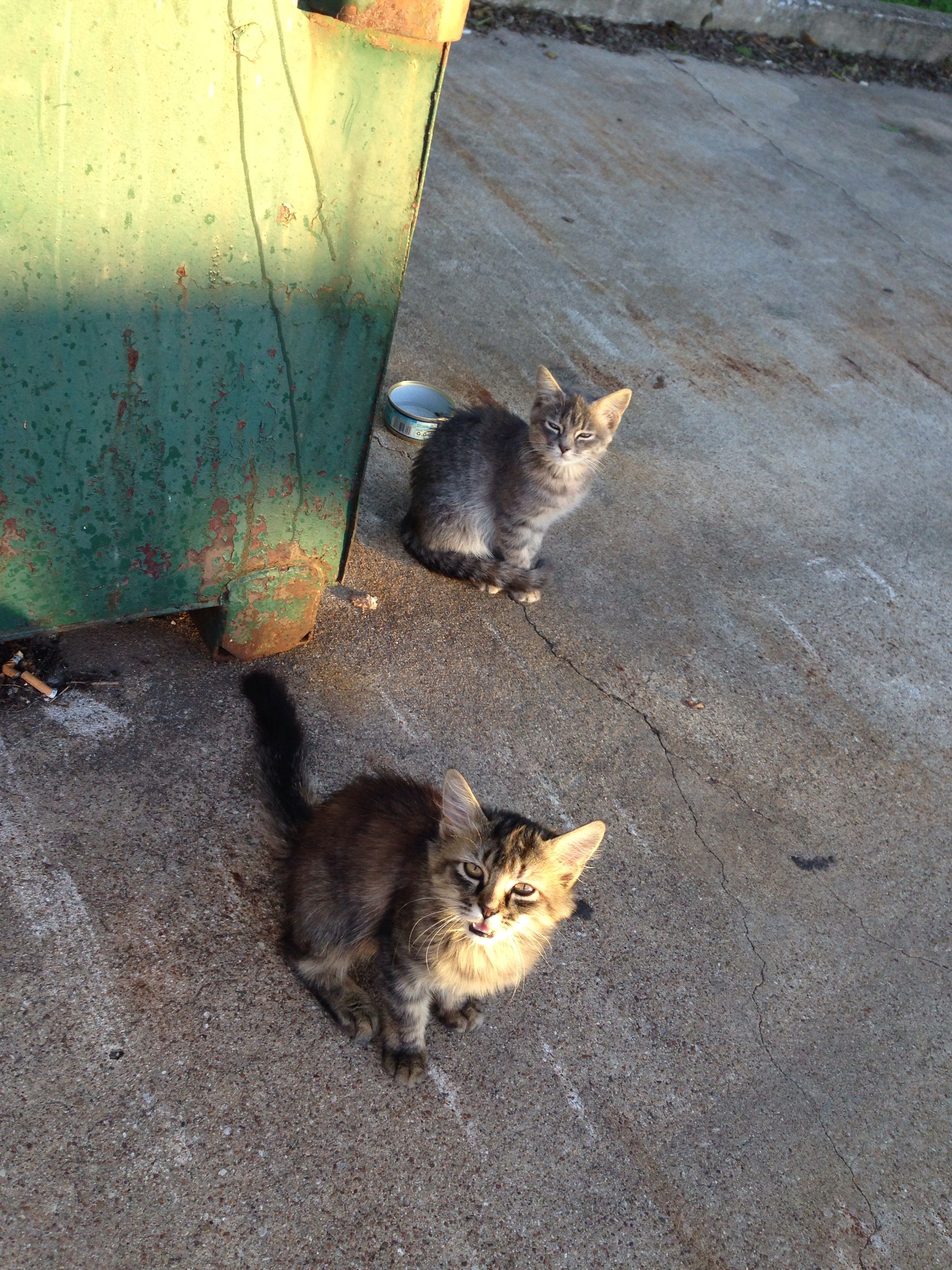 dominos dumpster kittens dumpster everything dominos dumpster kittens