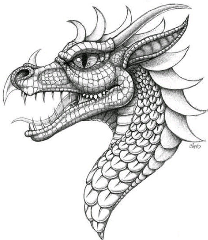 Pin By Jess On Plantillas Dragon Drawing Dragon Coloring Page Dragon Art