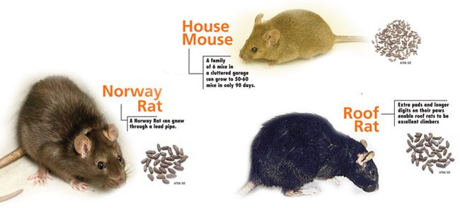 See The Bottom Of The Article For Lowe S Tips On Rodent