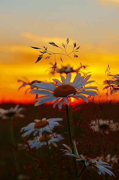 SingleFlower //Beautiful Images//Picture//Nature Photography Picture  Art