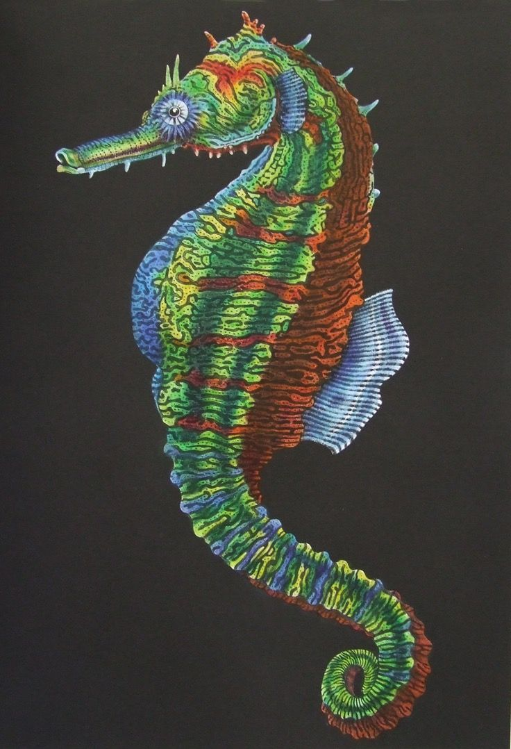 Sea Horse (page 41) Intricate Ink Animals In Detail. A coloring book ...
