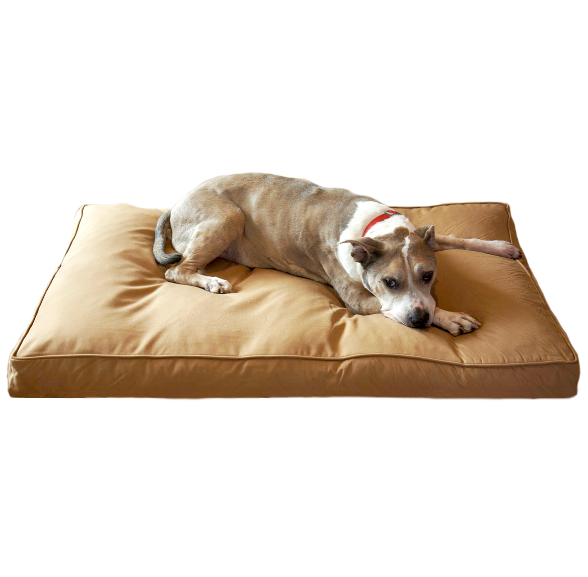 Chew Resistant Dog Bed With 200 Day Guarantee Dog bed
