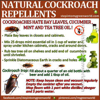 All Natural Cockroach Repellents Cockroach Repellent Repellents Cleaning