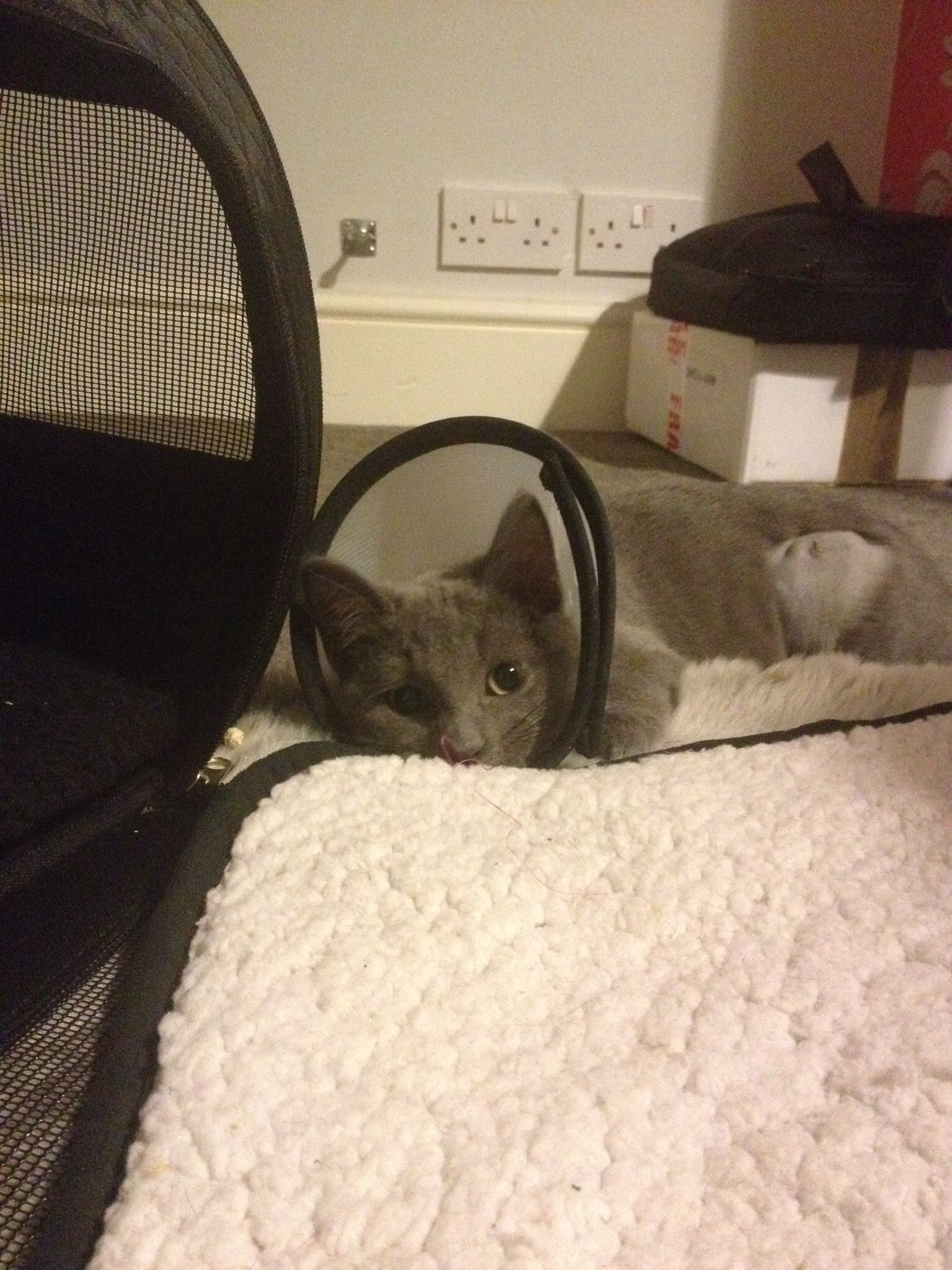 how long to keep cat confined after spay reddit