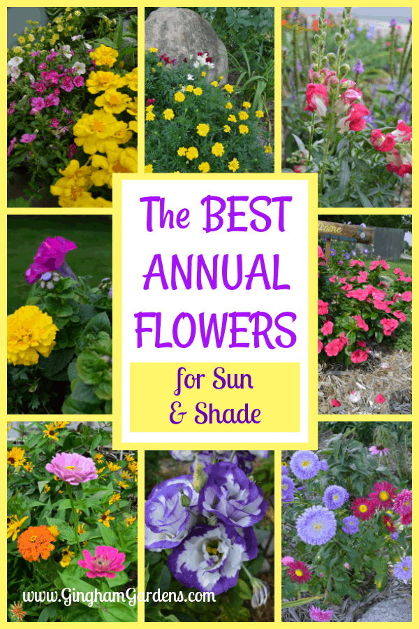 The Best Annual Flowers Annual Flowers Flower Garden Design