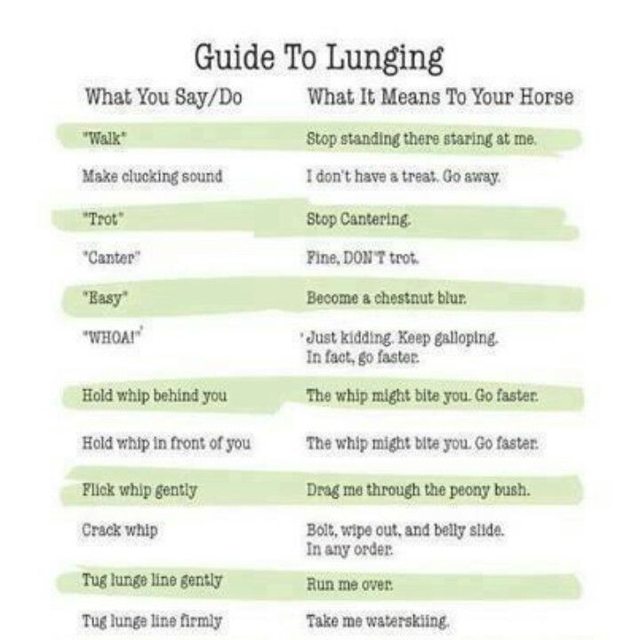 Guide to lunging