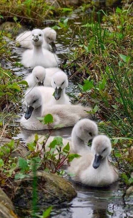 All my ducks in a row....LOL.....TRULY A GREAT PIC