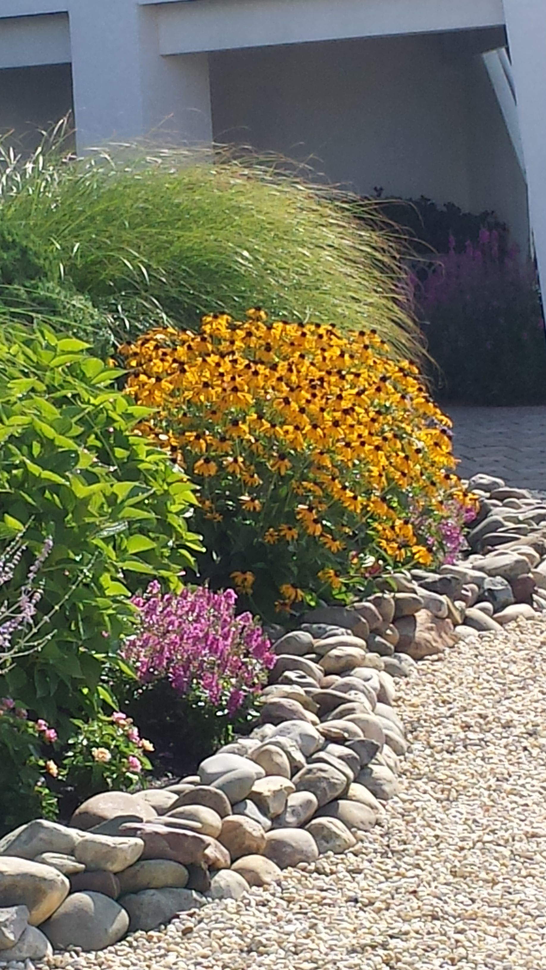 beautiful late summer color with black eyed susan and on classy backyard design ideas may be you never think id=13031