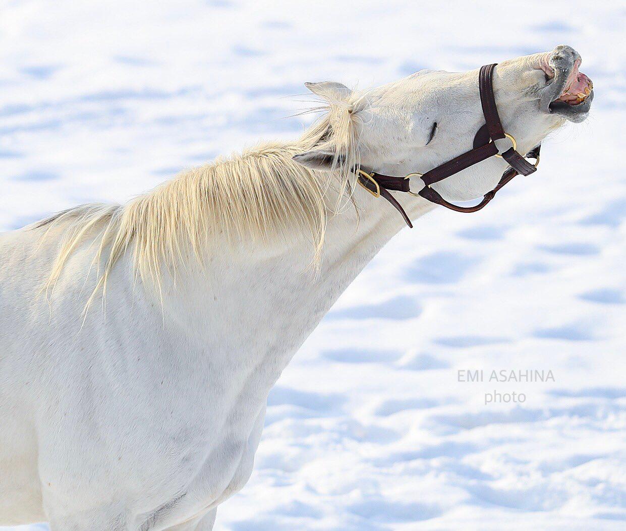 競馬のゴールドシップと雪の壁紙