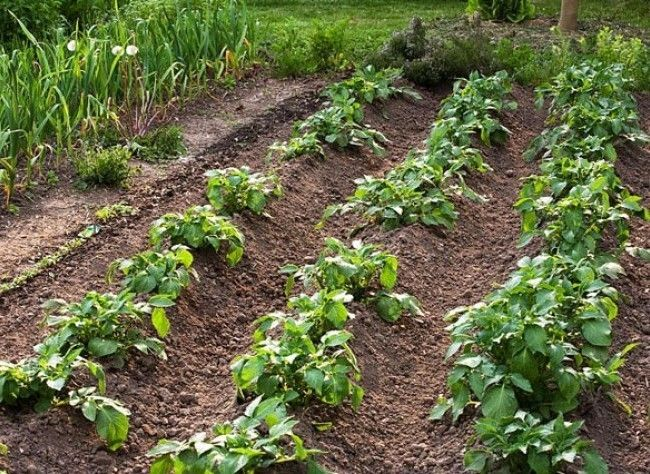 potager 3 gestes pour am liorer son rendement fonts father and gardens