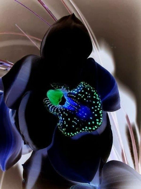 orchideenarten die sie erstaunen inspirieren wortlos. Black Bedroom Furniture Sets. Home Design Ideas