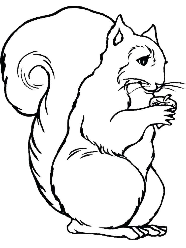 Skunk coloring page | Free Printable Coloring Pages | 1000x750